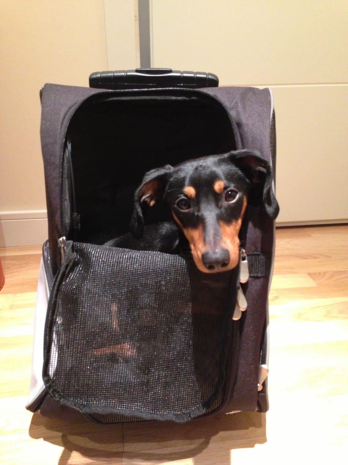 Viajar con perro en avión