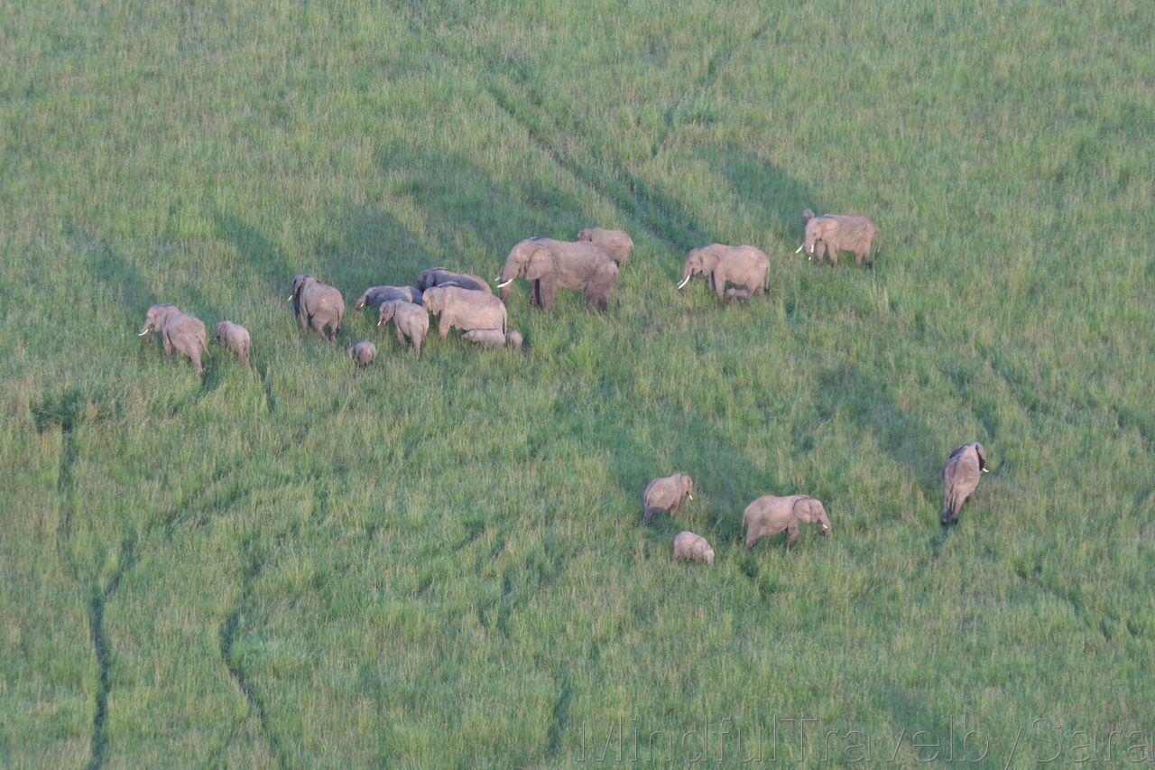 Excursion viaje en globo masai mara