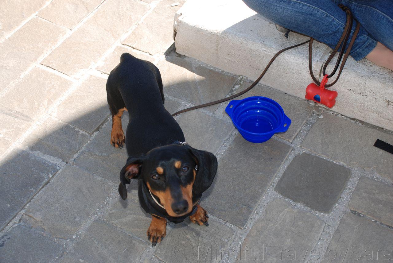Perro en Italia