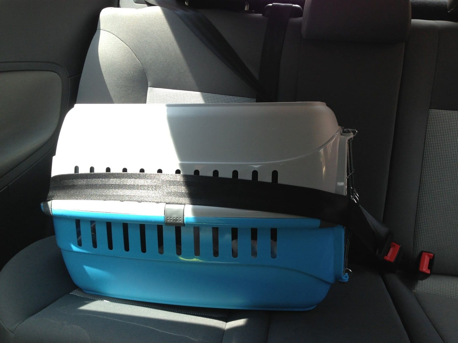 Transportin para viajar con perro en coche