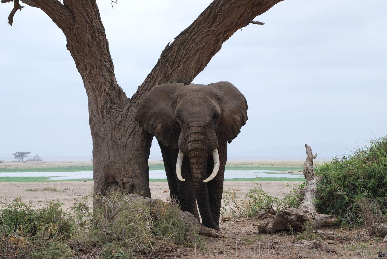 Viaje a Kenia: descubriendo el Parque Nacional de Amboseli