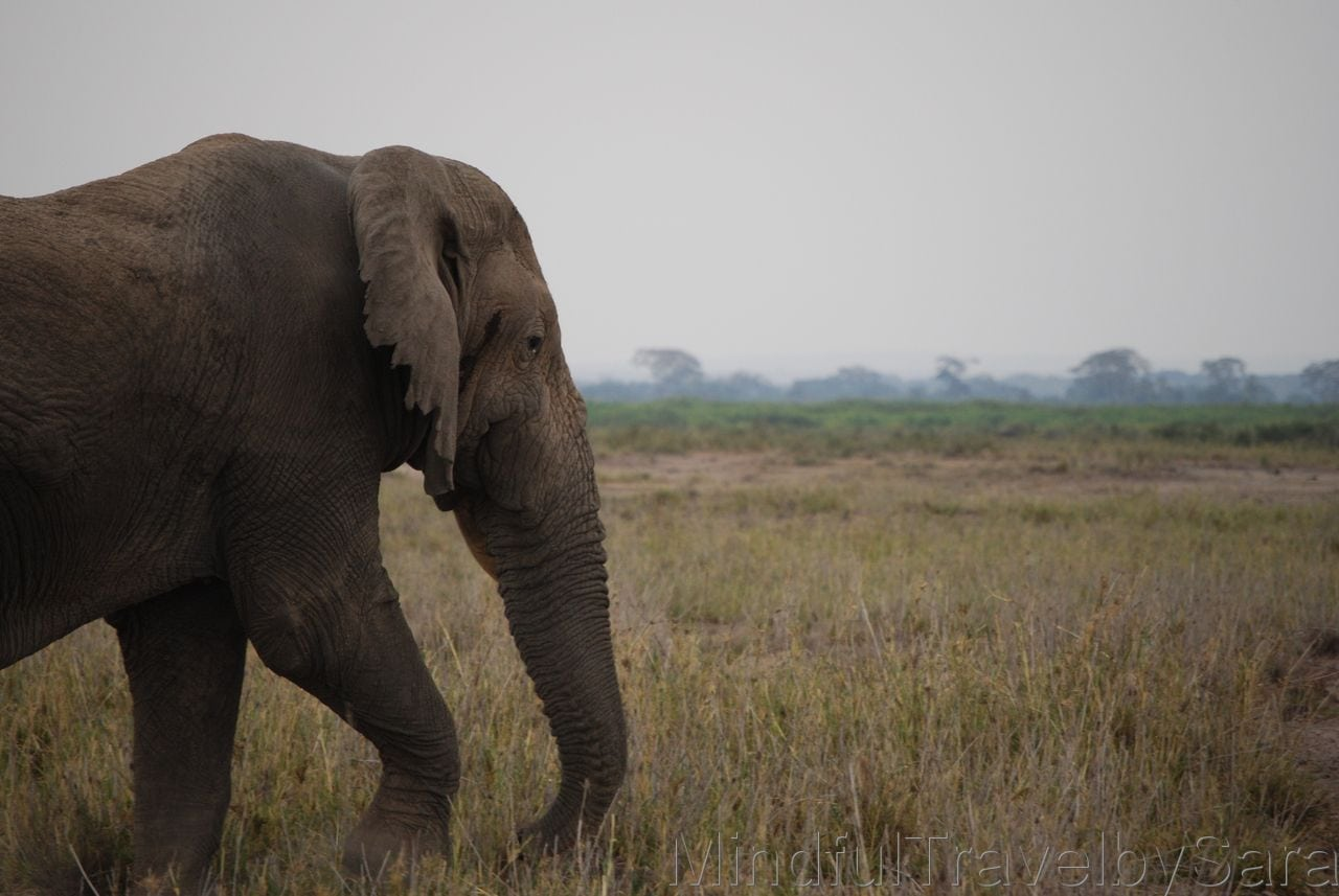 Parque Nacional de Amboseli en Kenia