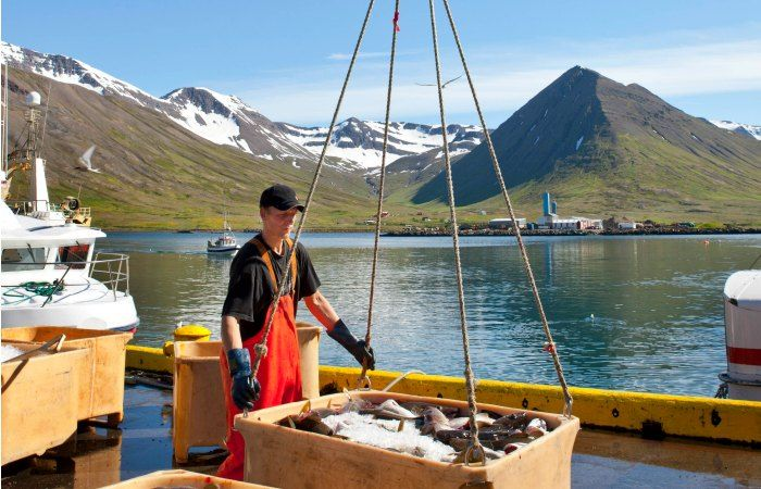 viajar a islandia en agosto