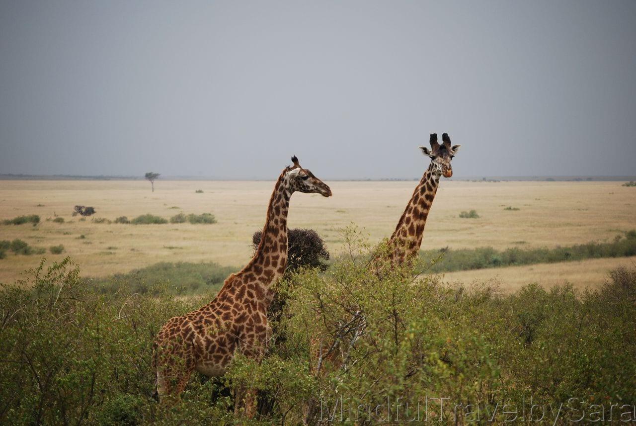 recomendaciones para viajar a Kenia