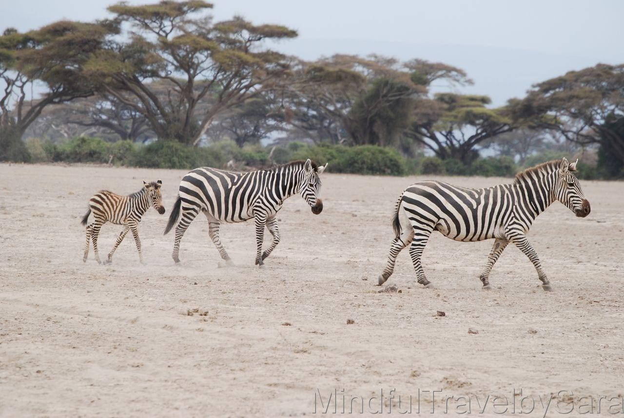 que hacer en kenia