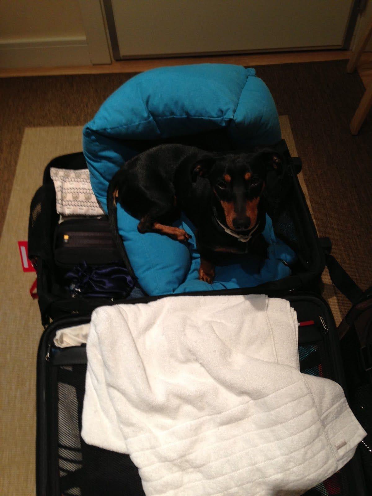 maleta para viajar con perro