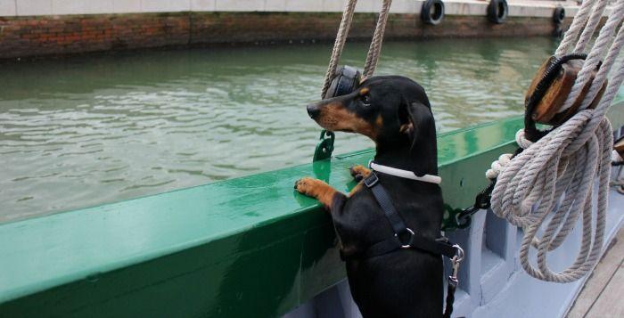 Viajar con perro a Cesenatico #cesenaticobellavita