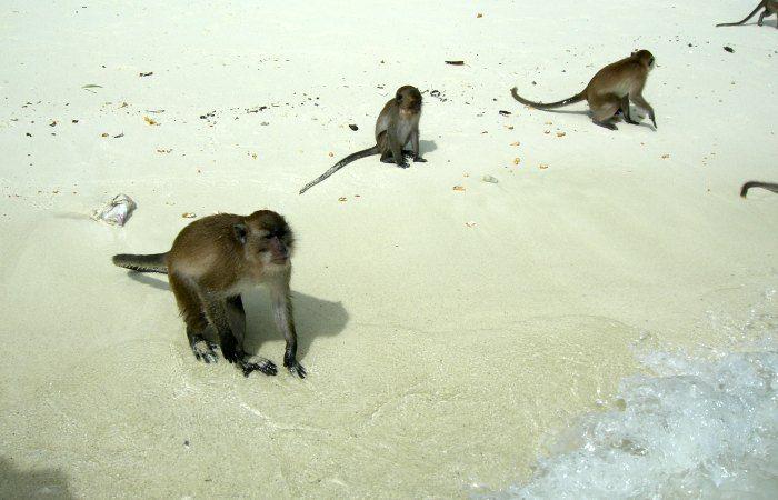 isla phi phi fotos