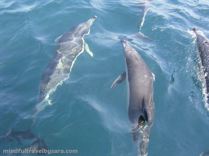avistamiento_de_delfines_en_cádiz