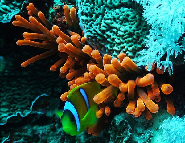 Marine-Life-Red Sea