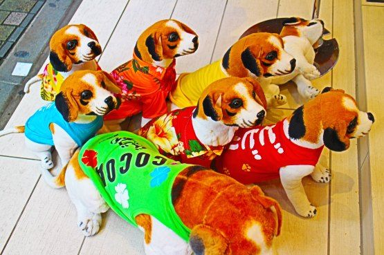 mascotas japon