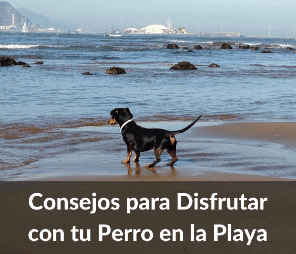 Consejos para viajar con perro a la playa
