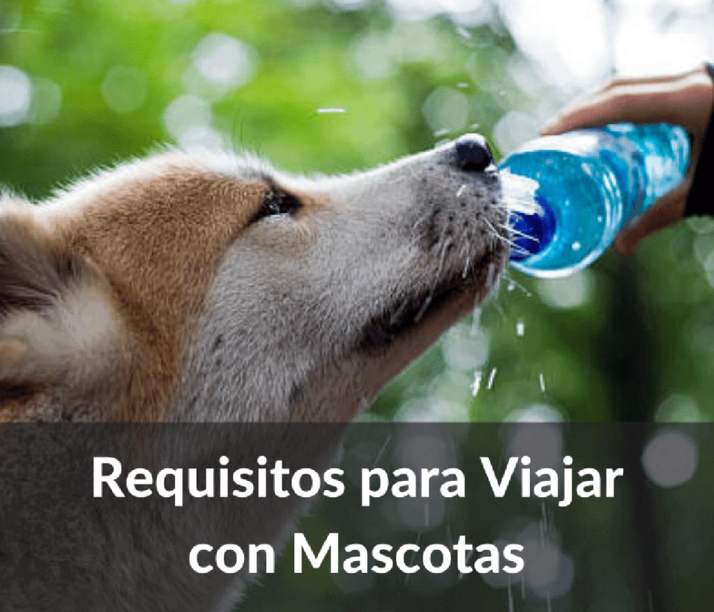 Requisitos para viajar con mascotas