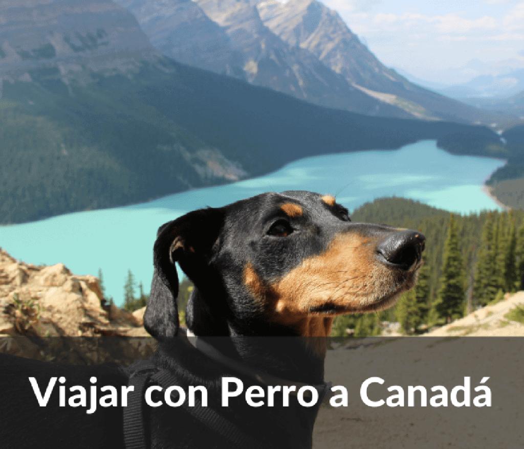 Viajar con perro a Canada