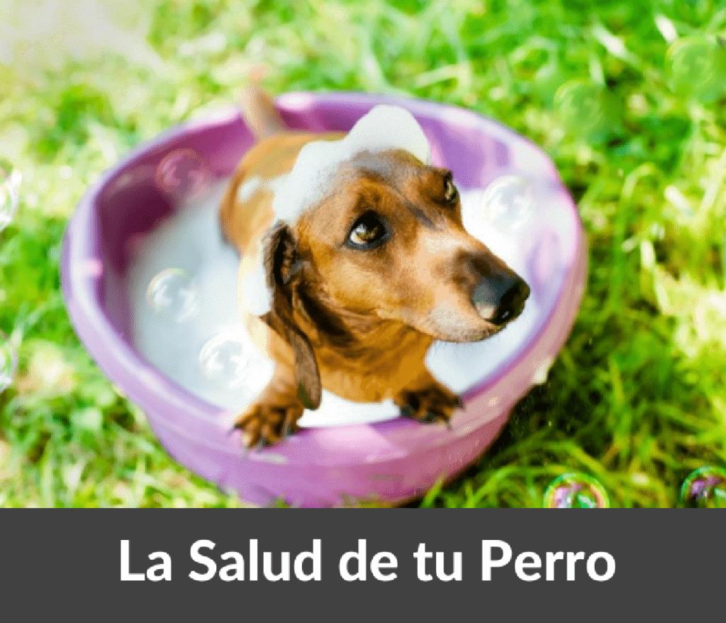 salud del perro