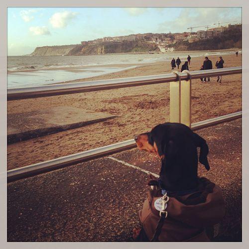 vacaciones con mi perro en la playa