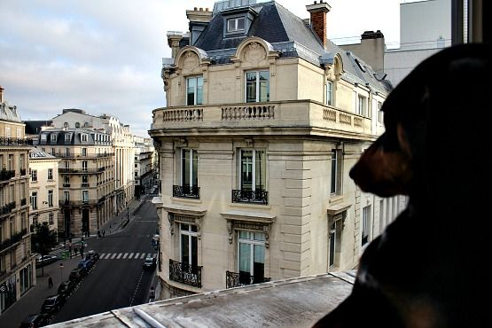 Alojamiento con perro