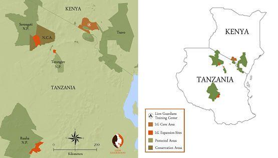Amboseli Leones