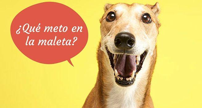 Accesorios para Perros: La Maleta de tu mascota