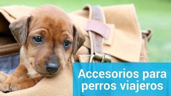 Accesorios para perros viajeros