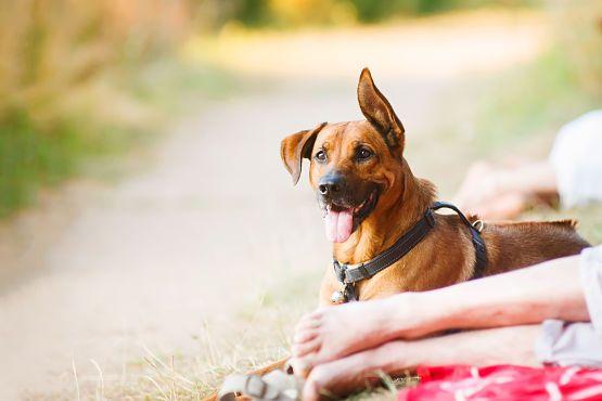 Como viajar con mascota