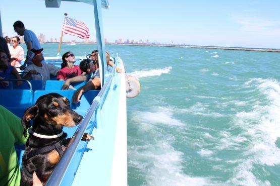 Paseo en Barco por la Ciudad de Chicago con perro