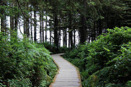 bosque isla de vancouver