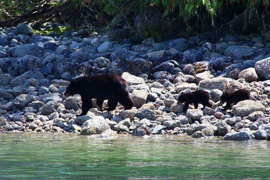 osos isla de vancouver