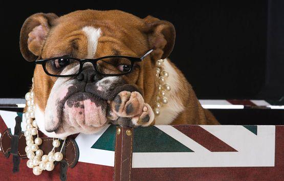 viajar con mascota a Reino Unido