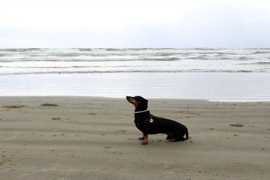 viajar con perro isla vancouver