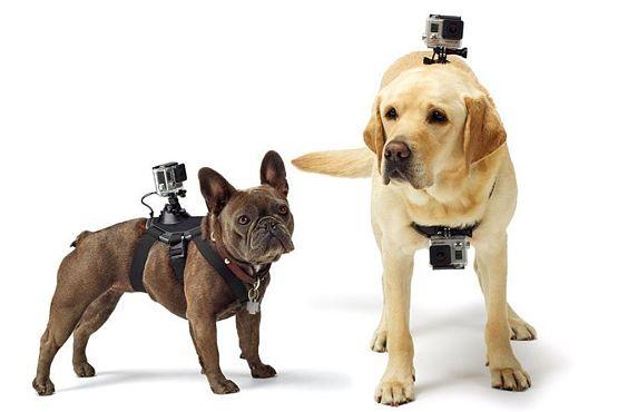 Arnes para perro Go Pro