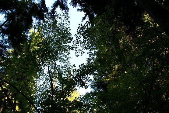 Bosque Parque Stanley