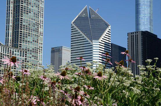 lugares turisticos de chicago