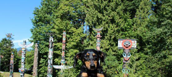 Parque Stanley con perro