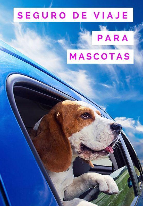 Seguro de viaje para perro
