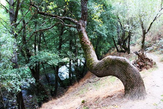 ruta ponton de la oliva