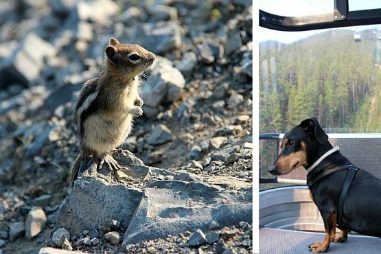 Viajar con Perro a Canadá Ardillas Banff