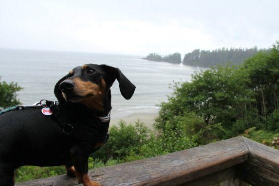Viajar con Perro a Canadá Bosque Tofino