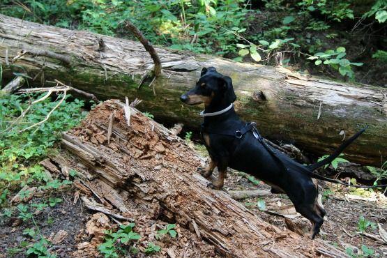 Viajar con Perro a Canadá Buscando Ardillas