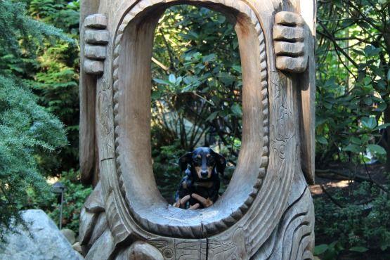 Viajar con Perro a Canadá Capilano