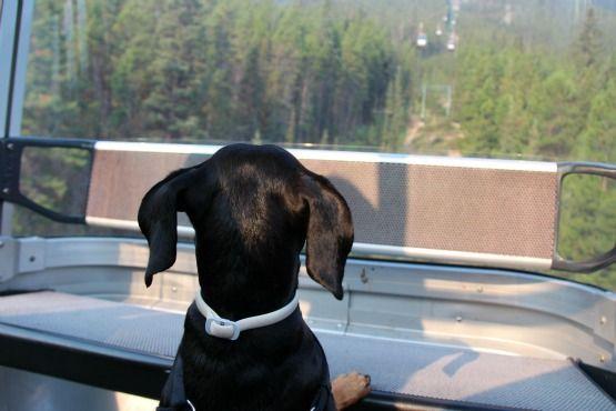 Viajar con Perro a Canadá Gondola