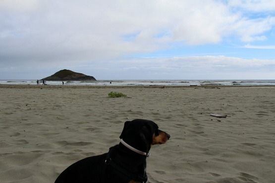 Viajar con Perro a Canadá Isla de Vancouver