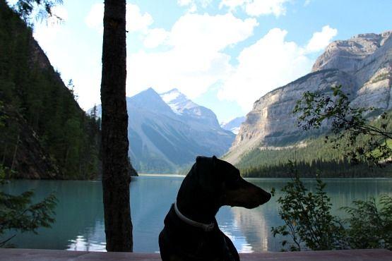 Viajar con Perro a Canadá Kinney Lake