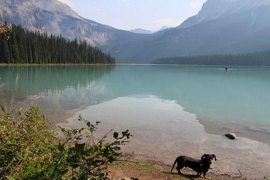 Viajar con Perro a Canadá Lago Banff