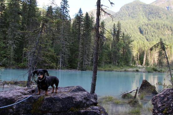 Viajar con Perro a Canadá Lago