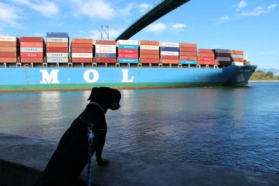 Viajar con Perro a Canadá Lions Gate