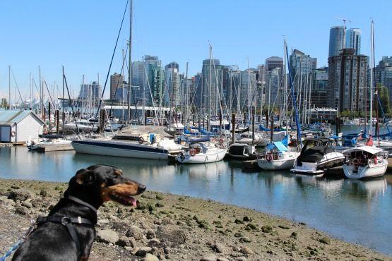 Viajar con Perro a Canadá Parque Stanley