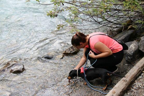 Viajar con Perro a Canadá Rio