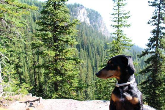 Viajar con Perro a Canadá Senderismo