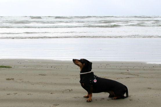Viajar con Perro a Canadá Tofino